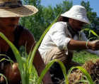 Black farmers stand to lose their farms, land and livelihoods without an estimated $4 billion in debt relief promised through th