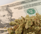 (SBA) programs to small firms operating in the legal cannabis sector.