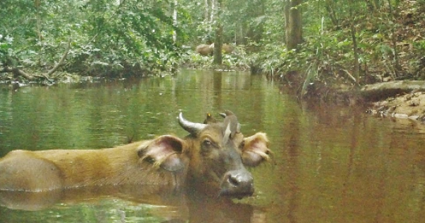 Gabon has become the first African country to receive payment for reducing carbon emissions by protecting its rainforest.