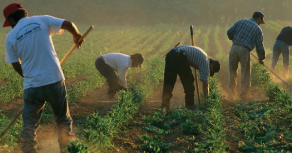 """decision of whether to continue or terminate the H-2A """"guest worker"""" program."""
